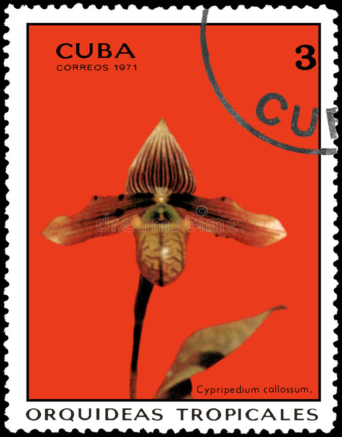 CUBA - CIRCA 1971: El sello impreso en Cuba muestra el callossum del Cypripedium de la orquídea, orquídeas de la serie fotografía de archivo libre de regalías