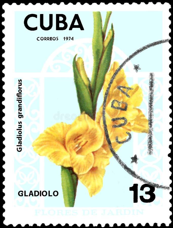 CUBA - CIRCA 1974: Il francobollo stampato in Cuba mostra il grandiflorus di gladiolo, fiori di serie illustrazione di stock