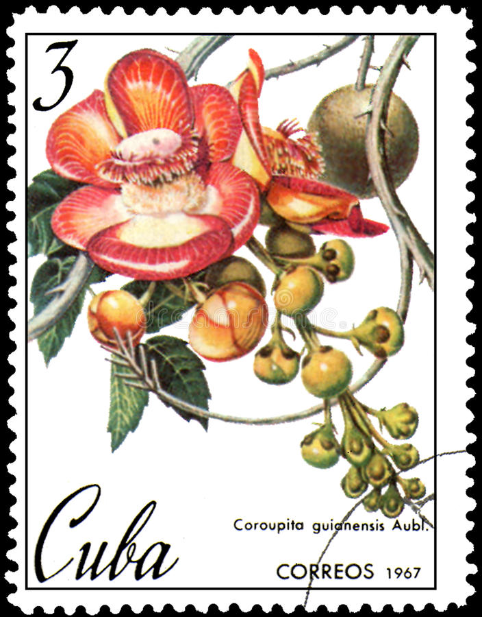 CUBA - CIRCA 1967: postage stamp, printed in Cuba, shows image of Couroupita guianensis stock photos