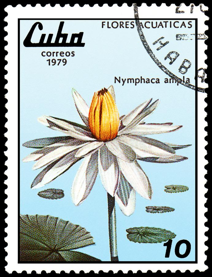 CUBA - CIRCA 1979: A stamp, printed in Cuba, shows a Nymphaea ampla, series water lilies royalty free stock photo