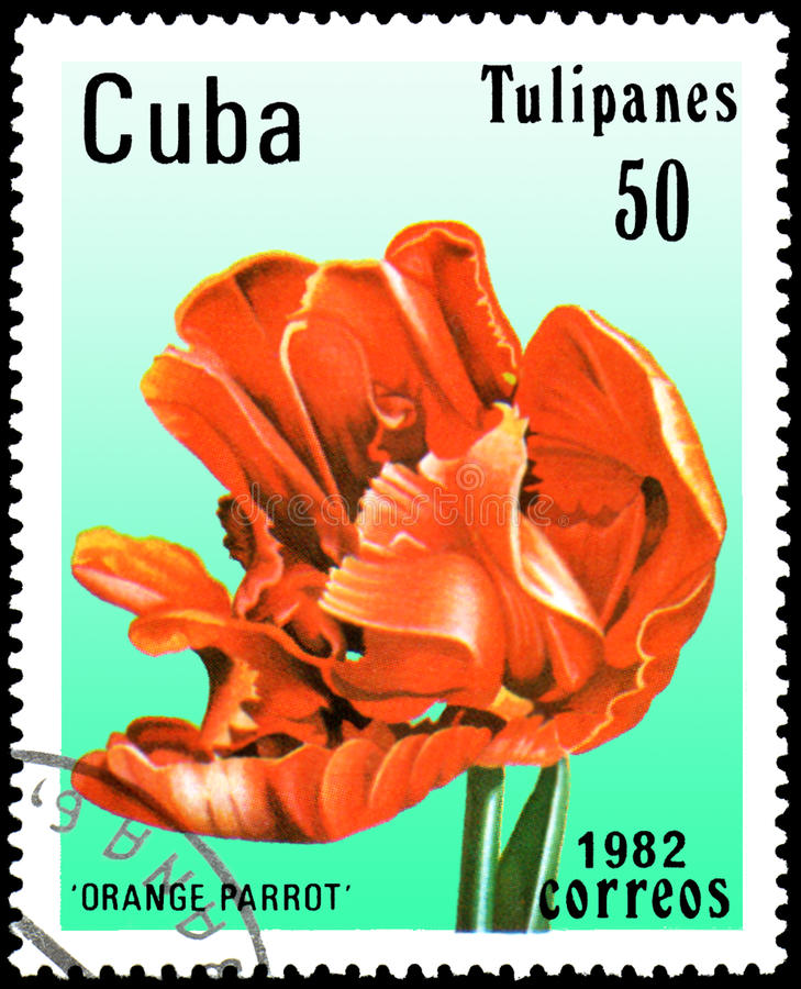 CUBA - CIRCA 1982: postage stamp printed in Cuba shows a tulip Orange Parrot royalty free stock photos