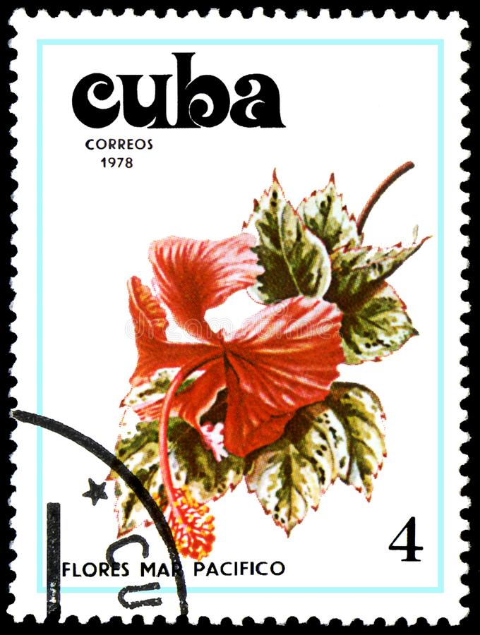 CUBA - CIRCA 1978: A stamp, printed in Cuba, shows a Hibiscus flower. Flowers of the Pacific Ocean royalty free stock image