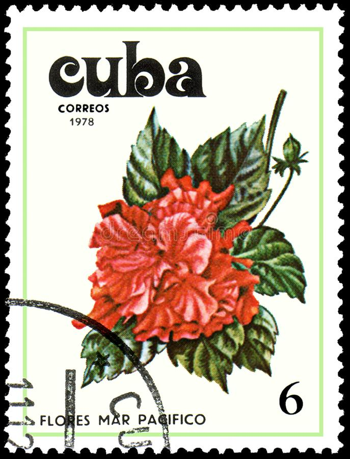 CUBA - CIRCA 1978: A stamp, printed in Cuba, shows a Hibiscus flower. Flowers of the Pacific Ocean royalty free stock photography