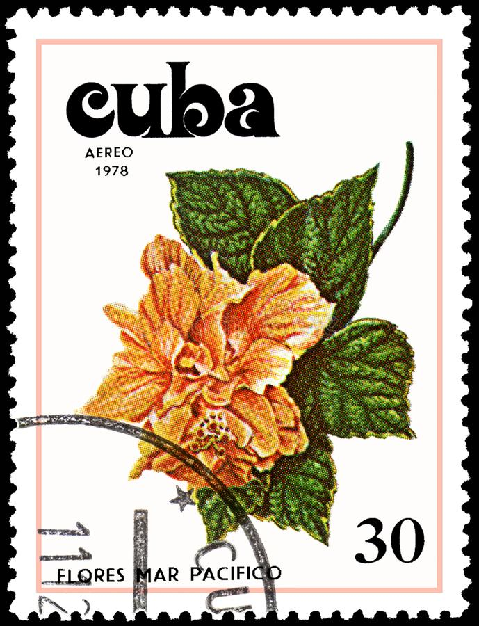 CUBA - CIRCA 1978: A stamp, printed in Cuba, shows a Hibiscus flower. Flowers of the Pacific Ocean stock images