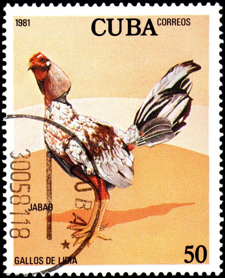 CUBA - CIRCA 1981: Un bollo stampato da Cuba mostra il gallo Jabao fotografia stock libera da diritti