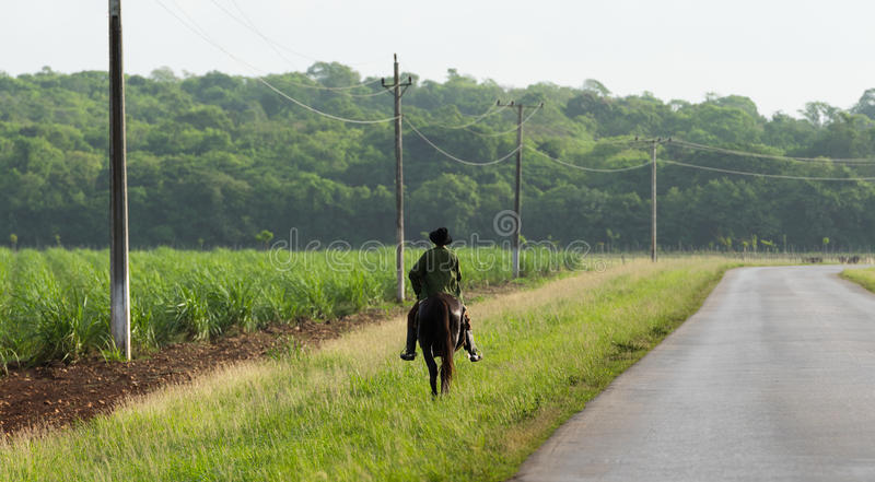 Cuba countryside province sugar cane field with Gaucho royalty free stock photos