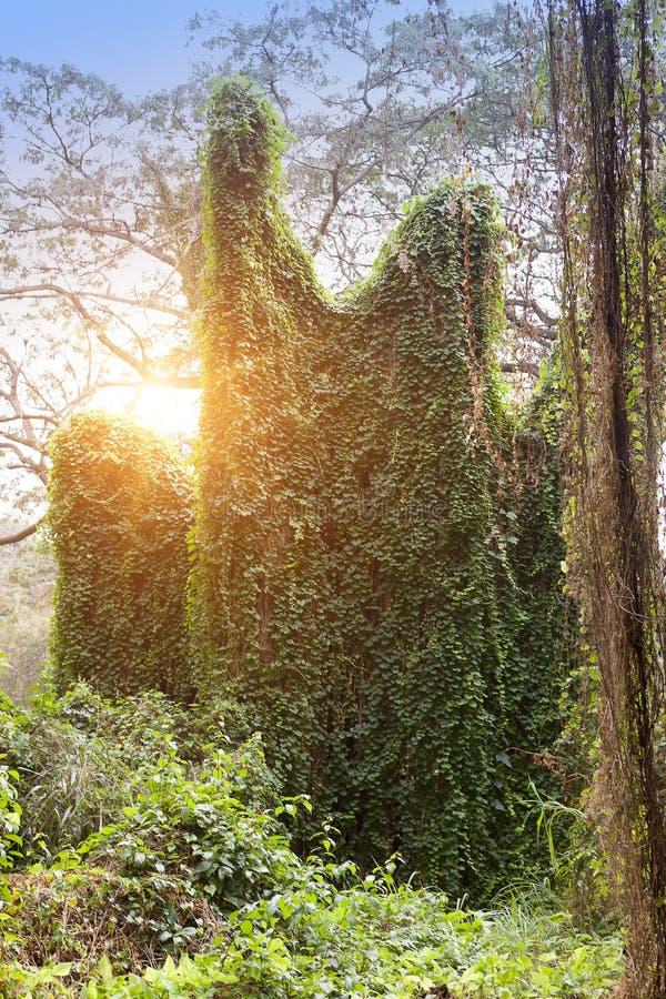 cuba havana Parque da cidade, paisagem no dia ensolarado fotos de stock royalty free