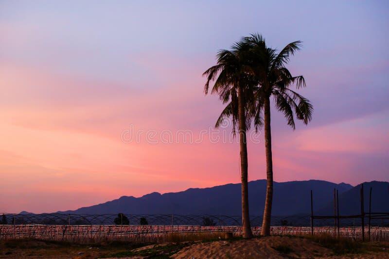 cuba karaibski kokosowy drzewko palmowe fotografia stock