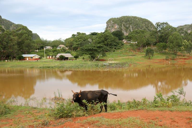 Cuba, lago em Vinales imagens de stock
