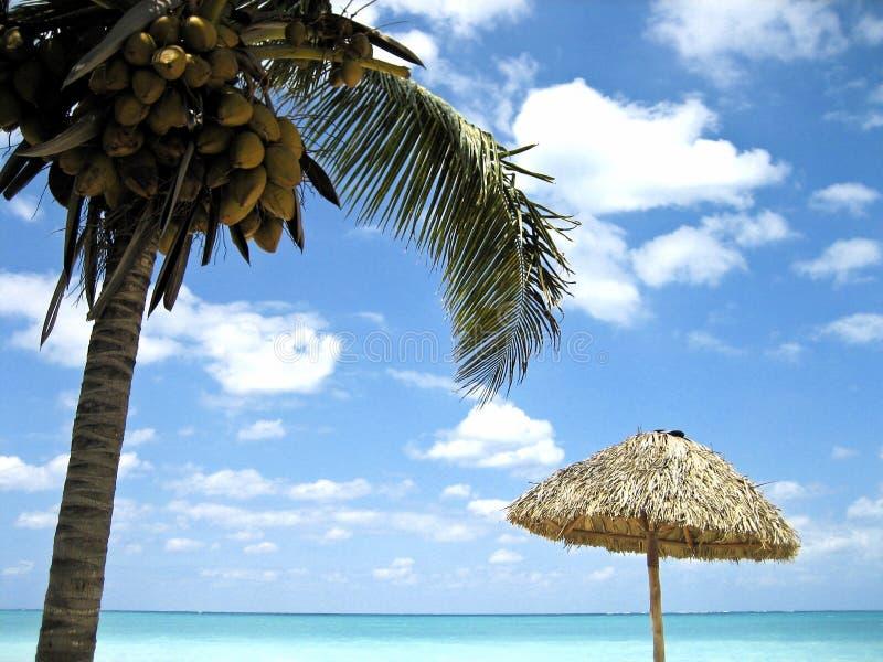 Cuba paradise. A landscape of a beach in cuba royalty free stock photography