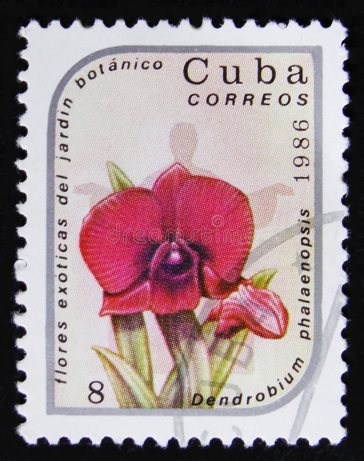 Cuba postage stamp shows Dendrobium phalaenopsis Flower, series `Exotic Flowers from botanical garden`, circa 1986 royalty free stock photo