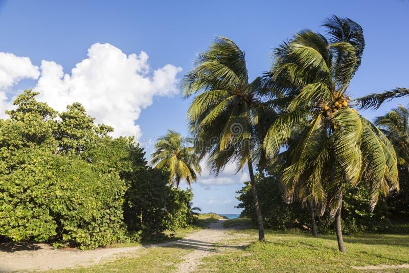 Cuba, spiaggia di Varadero fotografia stock
