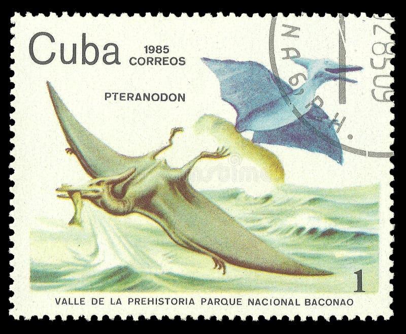 Pteranodon royalty free stock photography