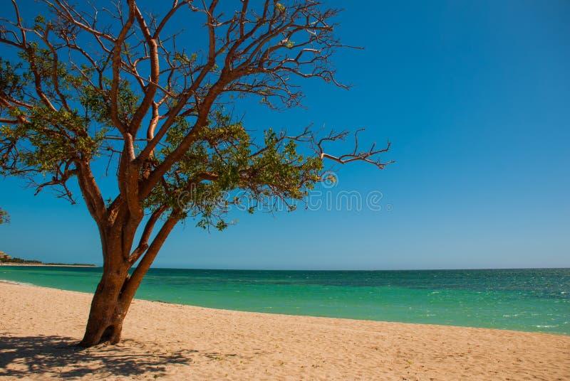 cuba trinidad Het Strand van Ancona Caraïbische overzees De boom groeit op het strand stock foto