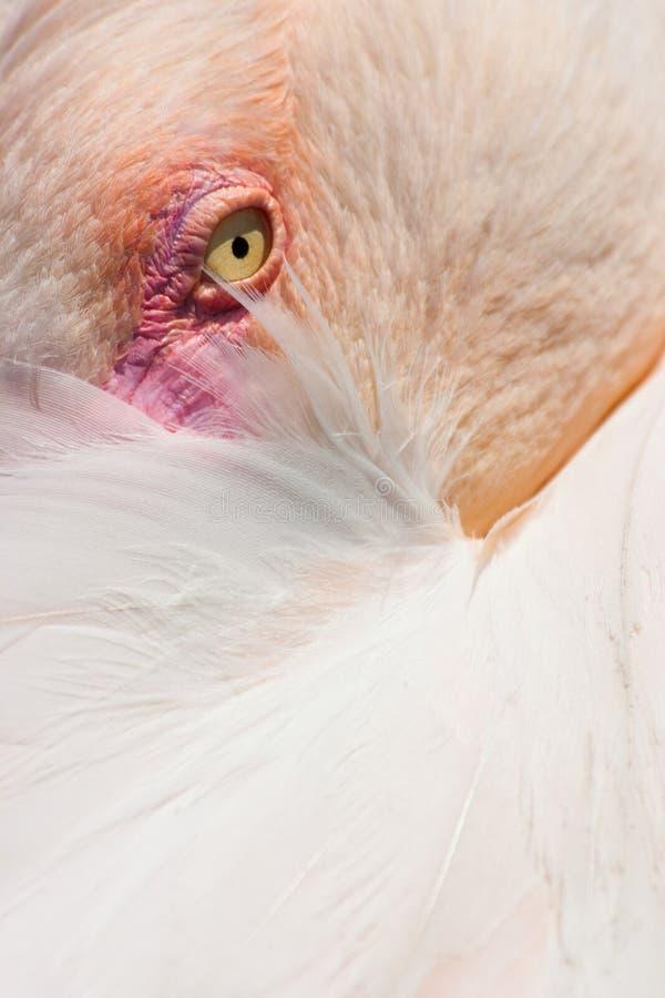 Cubaanse flamingo stock fotografie