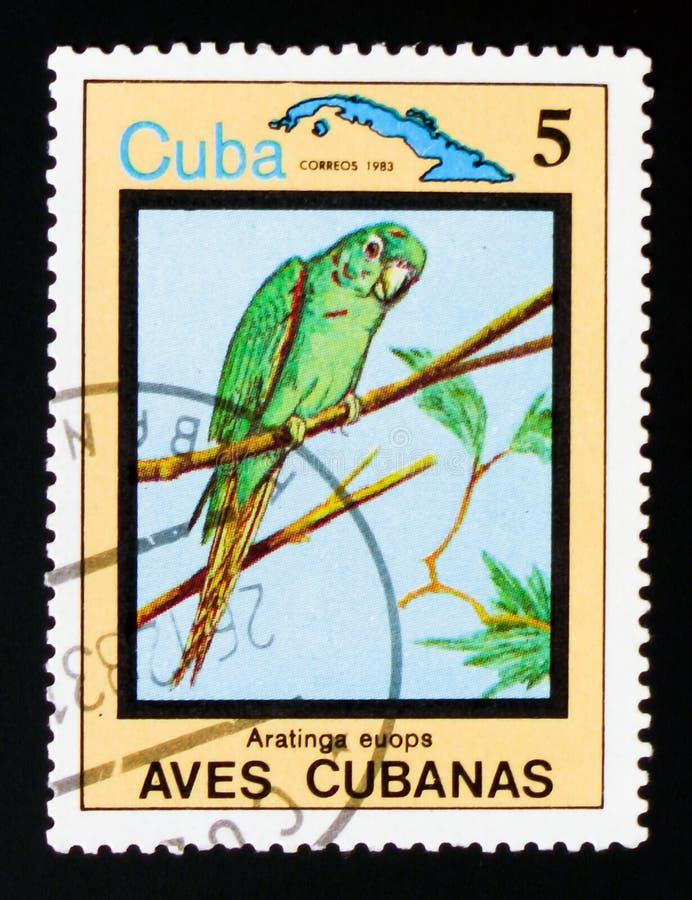 Cubaanse Parkiet Aratinga euops, Endemische vogels, circa 1983 stock foto
