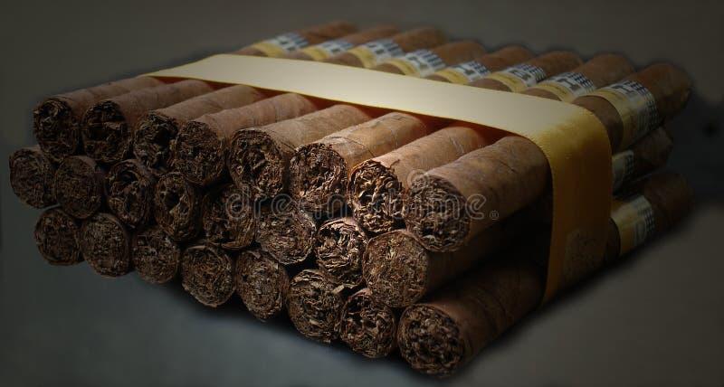 Cuban cohiba cigars stock image