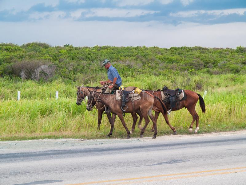 Cuban cowboy with three horses on a road. stock image