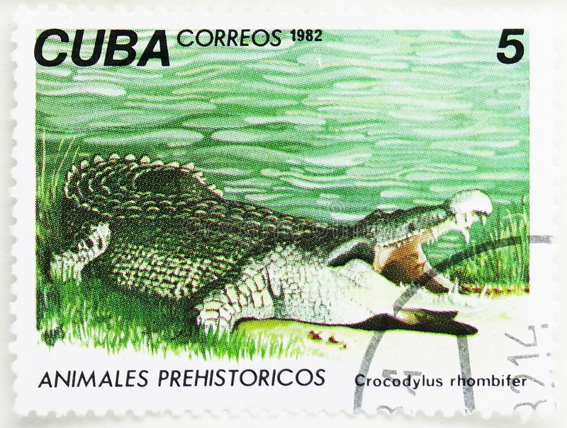 Cuban Crocodyle (Crocodylus rhombifer), Prehistoric Animals serie, circa 1982. MOSCOW, RUSSIA - JULY 25, 2019: Postage stamp printed in Cuba shows Cuban royalty free stock images