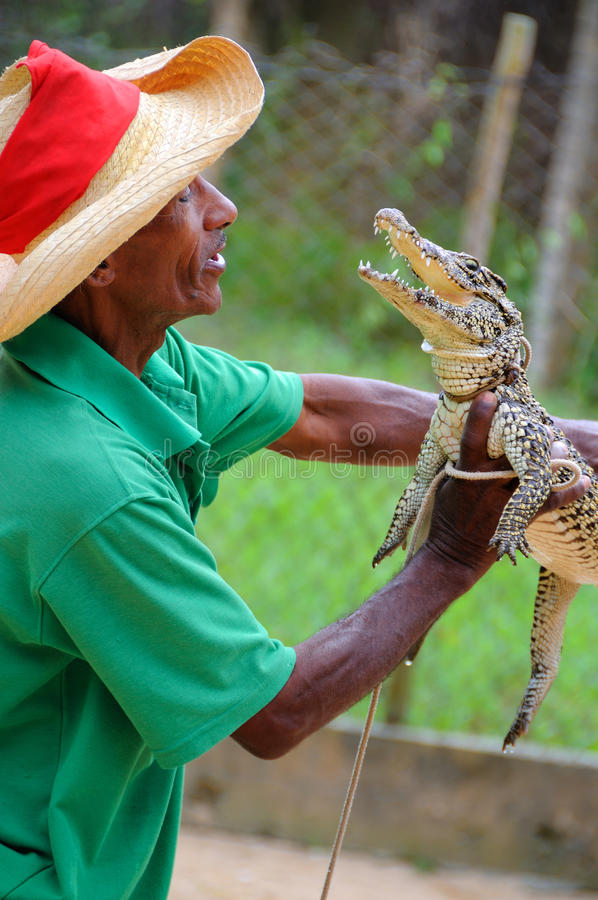 Cuban man holding crocodile. March 2008. royalty free stock photography