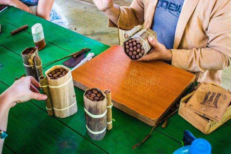 Cuban tobacco Havanos royalty free stock photos