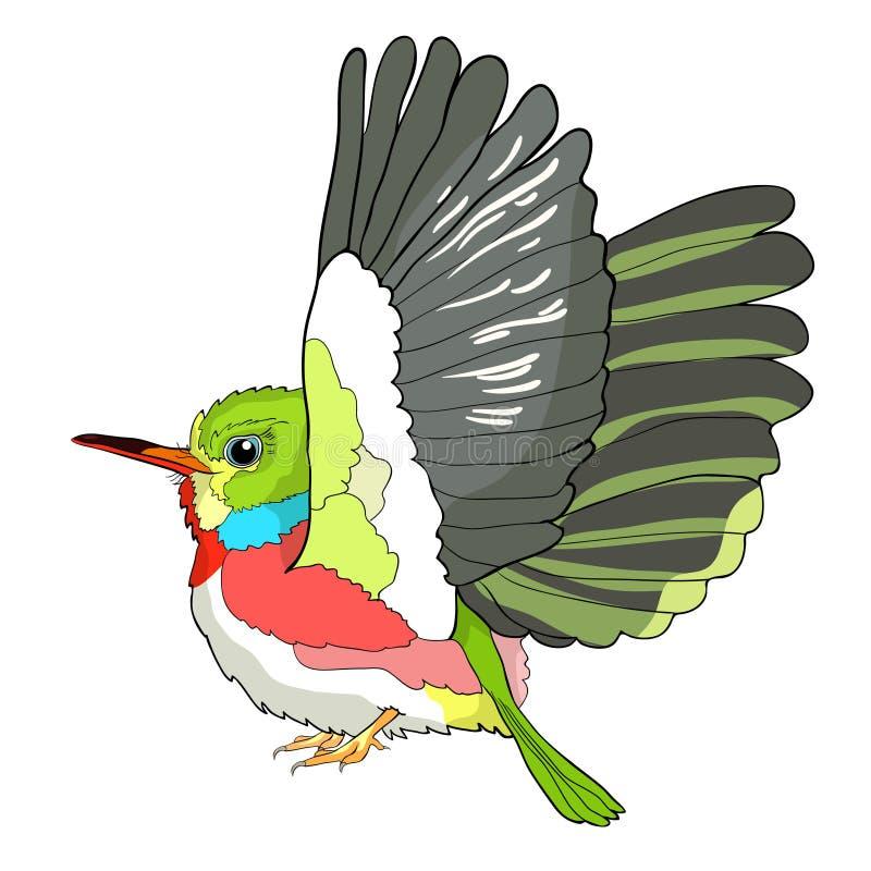 Download Cuban A Tody Bird Exotic Vector Illustration Stock