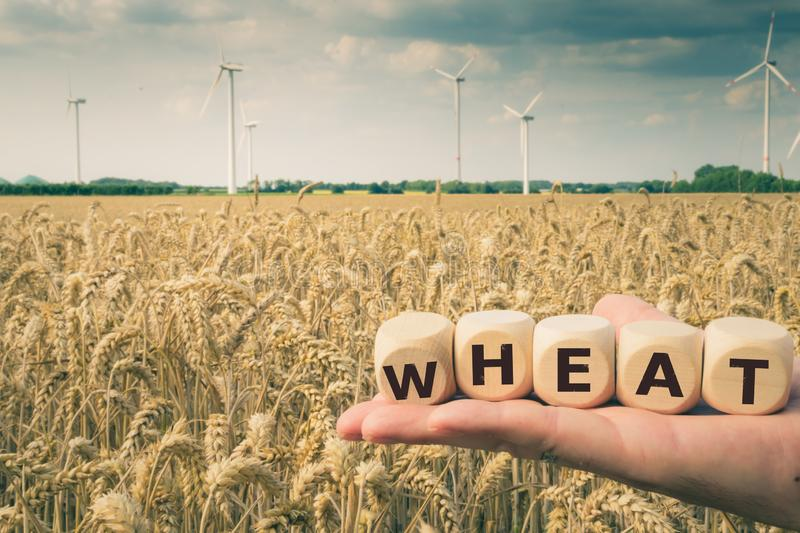 Cubes form the word `wheat`. In front of a wheat field royalty free stock photography