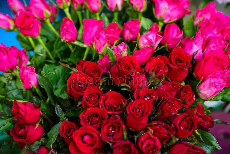 A cubeta da flor vermelha e cor-de-rosa brilhante bonita fresca da rosa da cor com pulverizador e verde de água deixa o fundo que imagem de stock