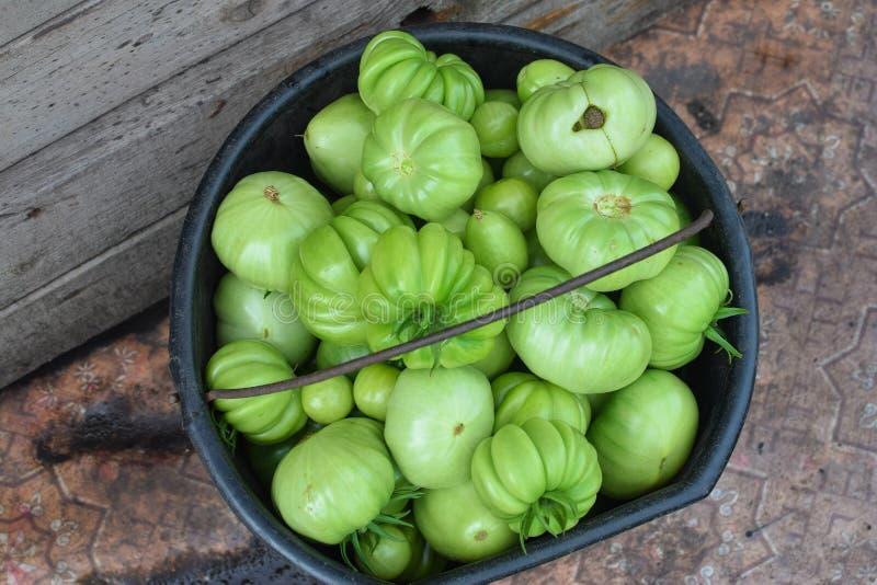 Cubeta de tomates frescos verdes na colheita do verão imagens de stock royalty free