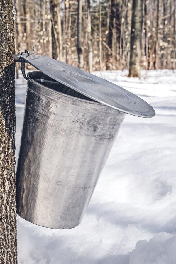 Cubeta do metal em uma árvore que recolhe a seiva do bordo fotos de stock