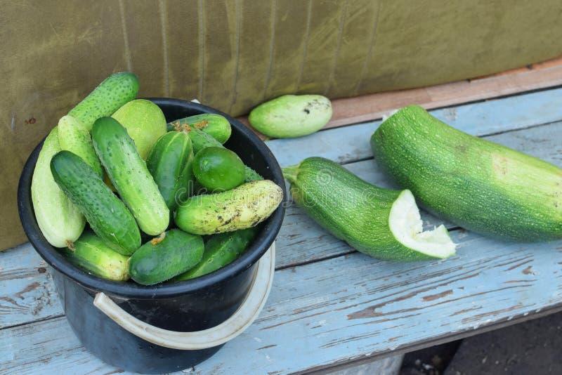 Cubeta preta com os pepinos verdes frescos no banco no jardim no verão imagens de stock