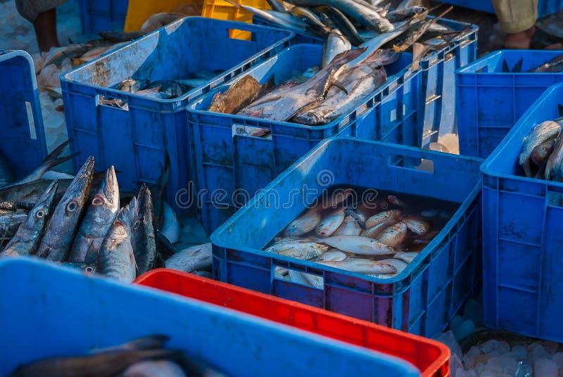 Cubetas dos peixes no mercado imagem de stock royalty free