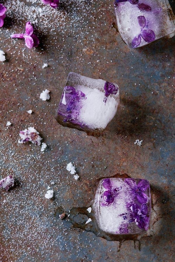 Cubetti di ghiaccio con i fiori lilla fotografia stock libera da diritti