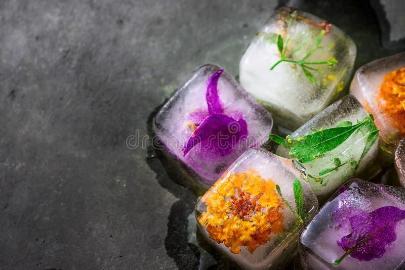 Cubetti di ghiaccio con le erbe congelate e le piante variopinte dei fiori che si fondono sul fondo di pietra scuro Bellezza, cur immagine stock libera da diritti