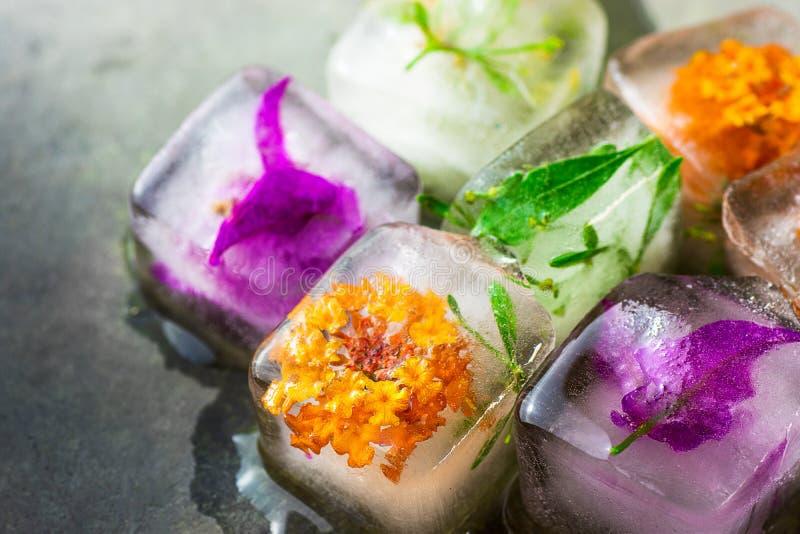 Cubetti di ghiaccio fatti a mano con la stazione termale facciale congelata di bellezza di cura di pelle dei fiori delle piante d fotografie stock libere da diritti
