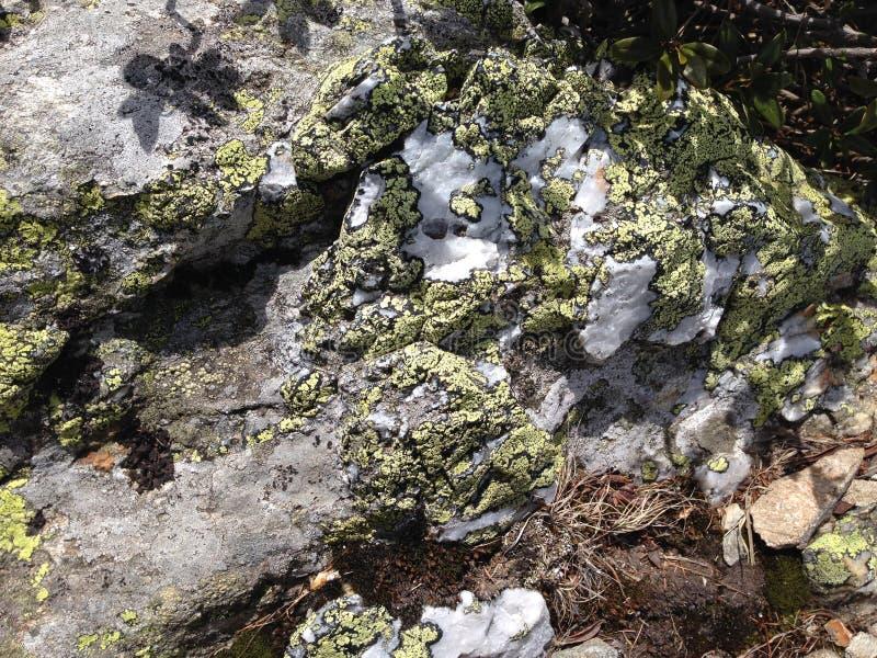 Cubierta alpina del musgo foto de archivo