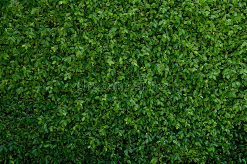 Cubierta verde de la licencia la pared foto de archivo libre de regalías