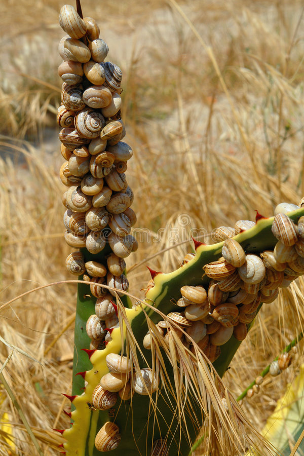 Cubierto por Snails foto de archivo libre de regalías