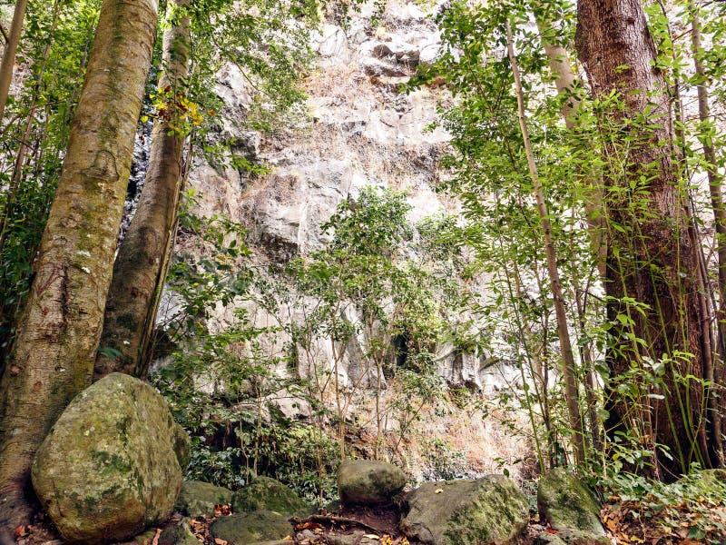 Cubo de Galga en el noreste de las Canarias verdes del La Palma foto de archivo libre de regalías
