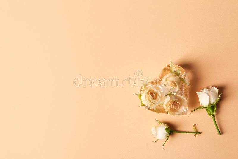 Cubo de hielo en forma de corazón con las rosas en fondo del color imagen de archivo libre de regalías