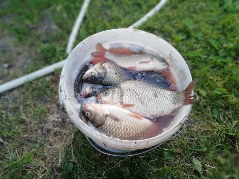 Cubo de los pescados fotografía de archivo libre de regalías