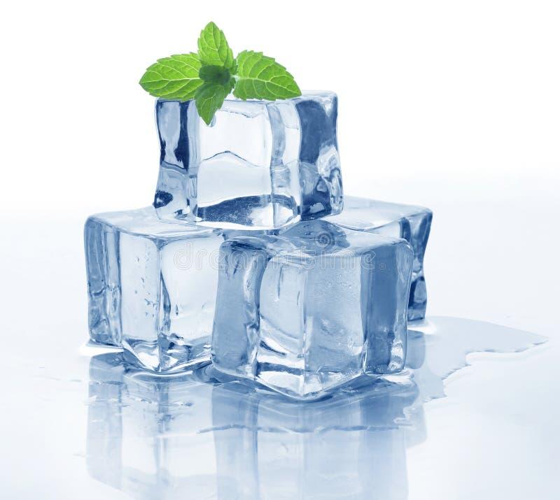 Cubo e menta di ghiaccio fotografia stock libera da diritti