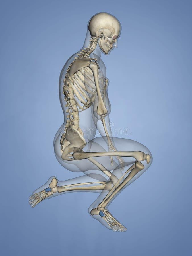 Cuboid Bone, 3D Model stock image