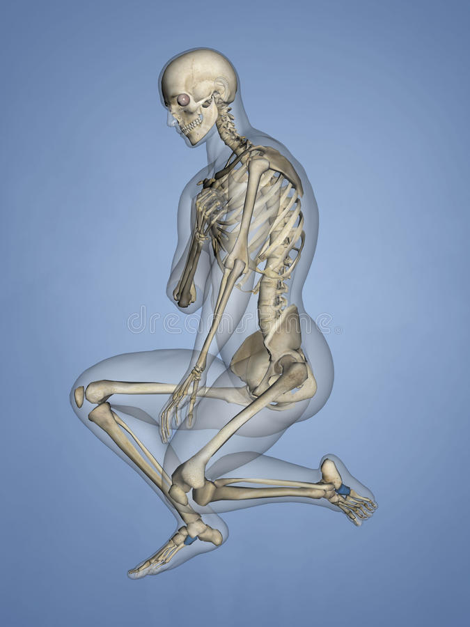 Cuboid Bone, 3D Model stock photo