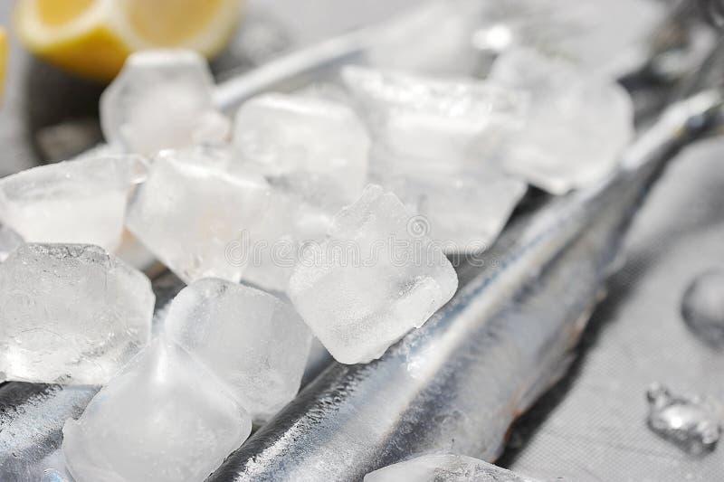 Cubos de hielo y pescados congelados foto de archivo
