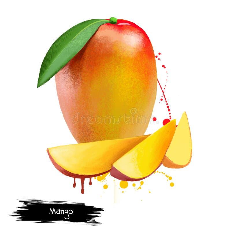 Cubos y rebanadas del mango Aislado en un fondo blanco ilustración del vector