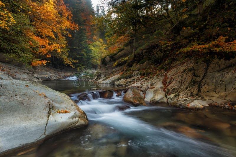 Cubowaterval in de herfst stock afbeelding