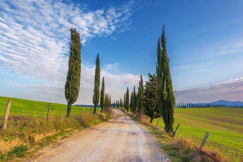 Cubra con grava el camino con los árboles de ciprés verdes en la primavera Toscana imagenes de archivo