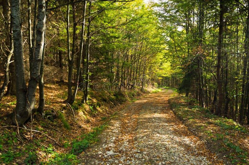 Cubra con grava el camino de la montaña a través de bosque en la montaña de Bobija fotos de archivo