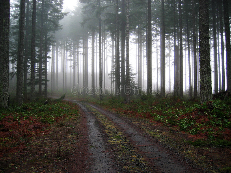 Cubra con grava el camino en la niebla foto de archivo libre de regalías